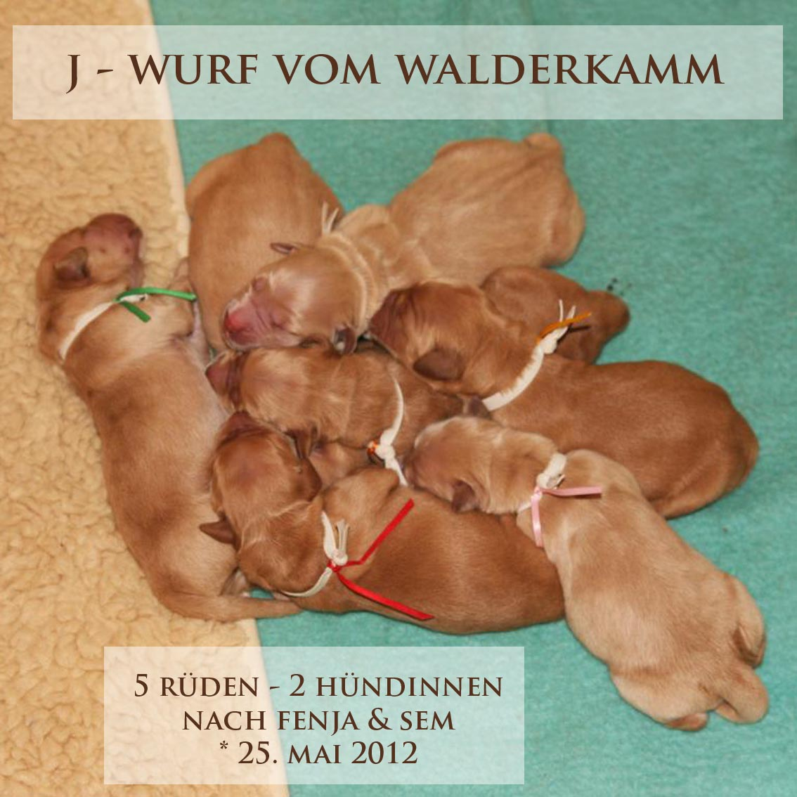 cover_welpen_tag_4